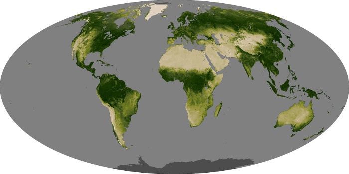 Global Map Vegetation Image 134