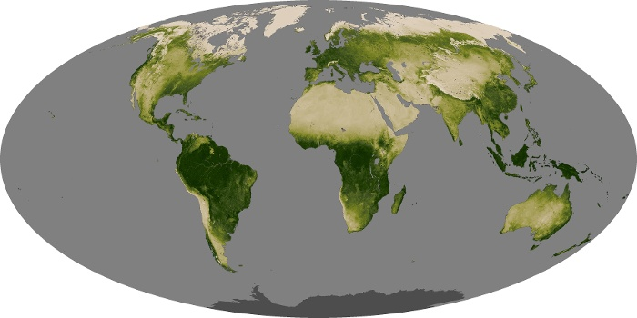 Global Map Vegetation Image 142