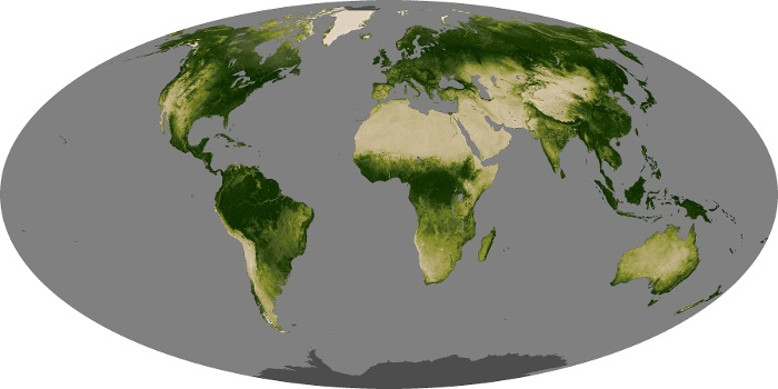 Global Map Vegetation Image 127