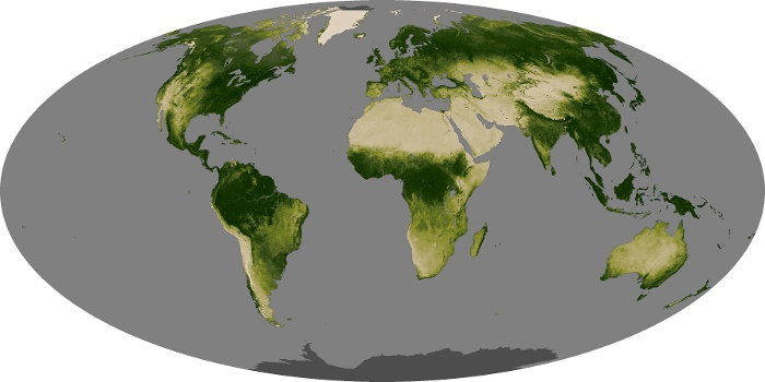 Global Map Vegetation Image 128