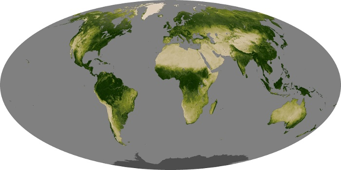 Global Map Vegetation Image 129