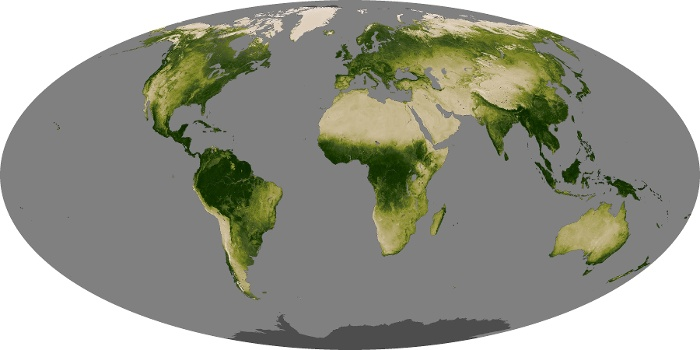 Global Map Vegetation Image 160