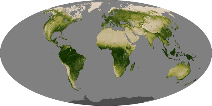 Global Map Vegetation Image 166