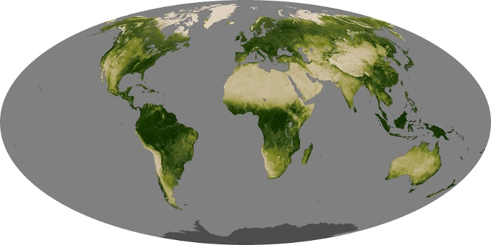 Global Map Vegetation Image 167