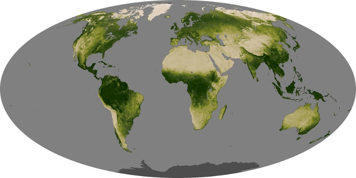 Global Map Vegetation Image 200