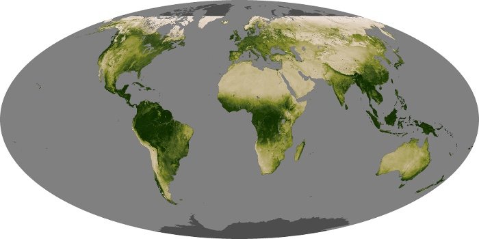 Global Map Vegetation Image 201