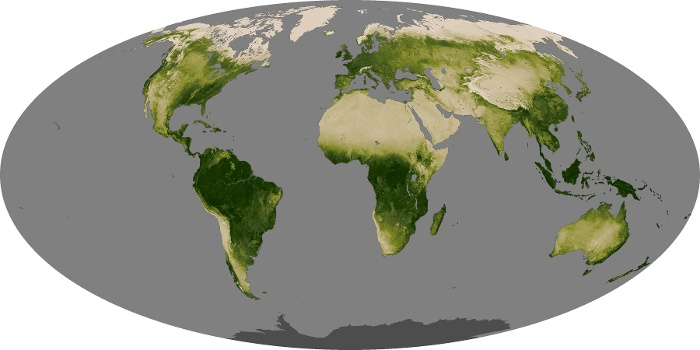 Global Map Vegetation Image 206