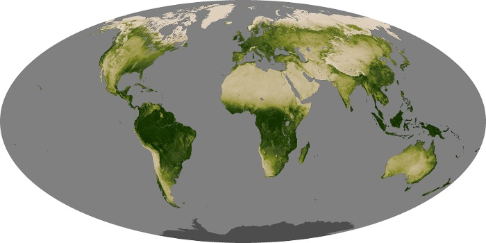 Global Map Vegetation Image 190