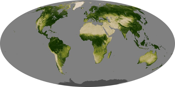 Global Map Vegetation Image 222