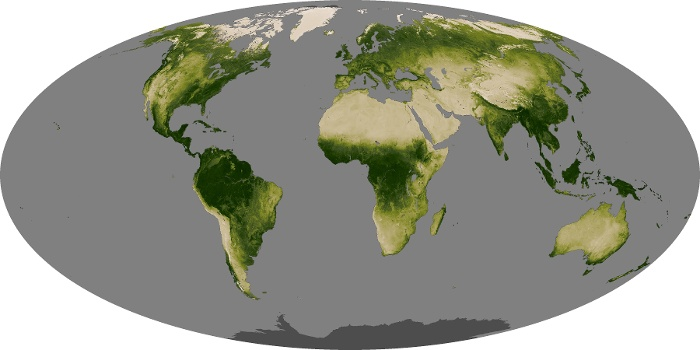 Global Map Vegetation Image 224