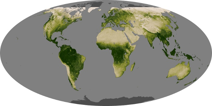 Global Map Vegetation Image 225