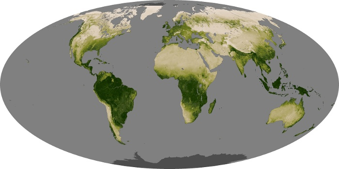 Global Map Vegetation Image 228