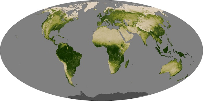 Global Map Vegetation Image 230