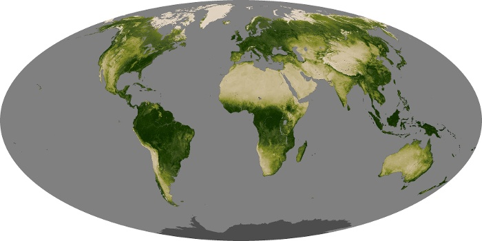 Global Map Vegetation Image 231