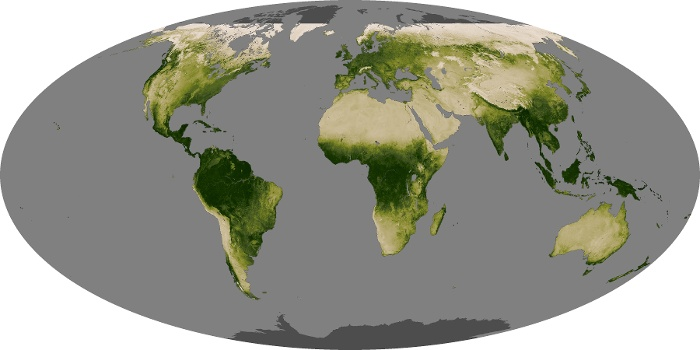 Global Map Vegetation Image 237