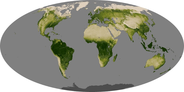 Global Map Vegetation Image 242