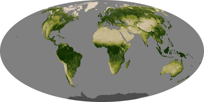 Global Map Vegetation Image 243