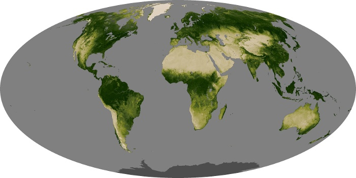Global Map Vegetation Image 245