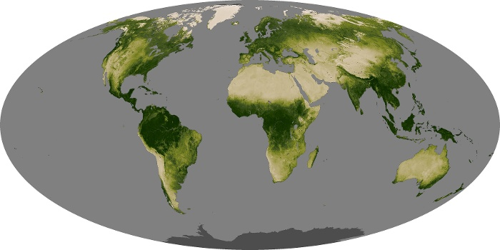 Global Map Vegetation Image 248