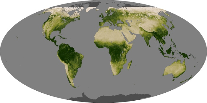 Global Map Vegetation Image 249
