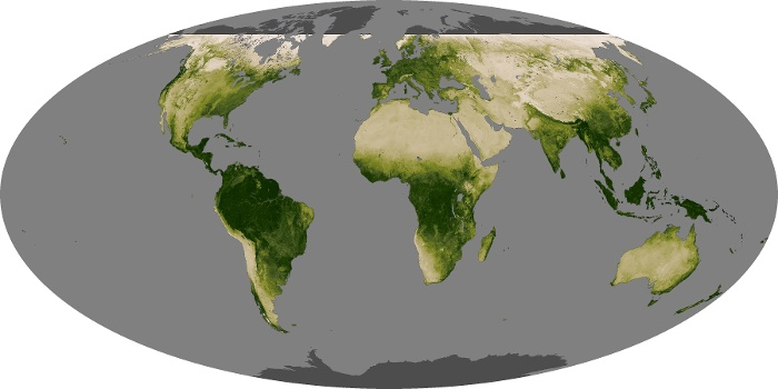 Global Map Vegetation Image 250