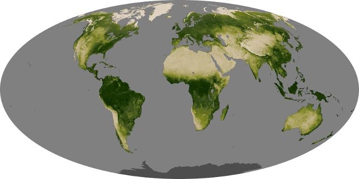 Global Map Vegetation Image 255