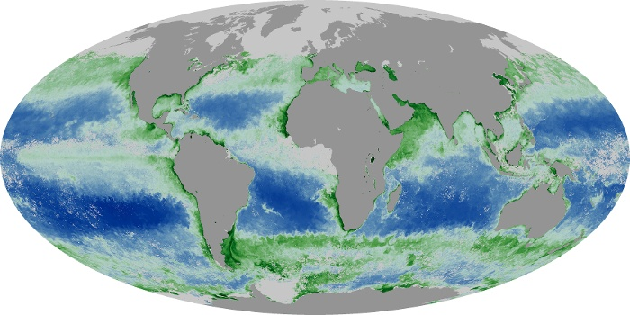 Global Map Chlorophyll Image 7
