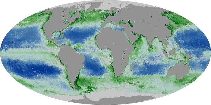 Global Map Chlorophyll Image 16