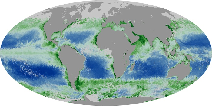 Global Map Chlorophyll Image 19