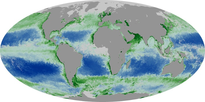 Global Map Chlorophyll Image 20