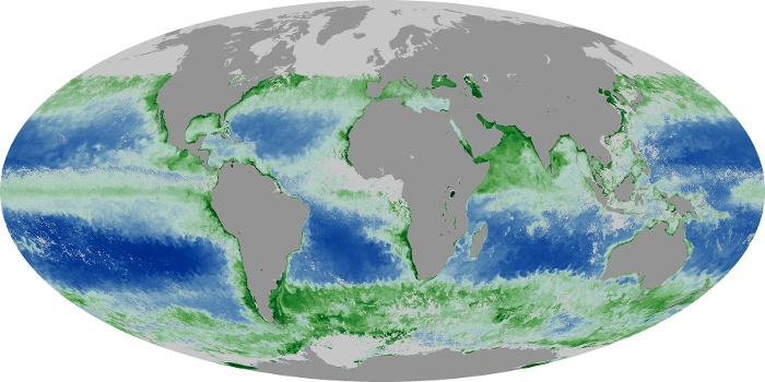Global Map Chlorophyll Image 42