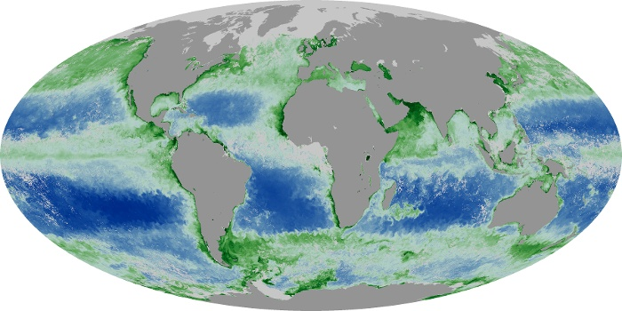 Global Map Chlorophyll Image 44