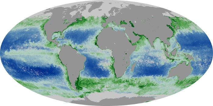 Global Map Chlorophyll Image 5