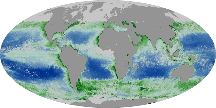 Global Map Chlorophyll Image 6