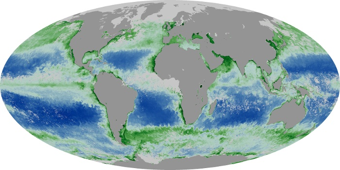 Global Map Chlorophyll Image 8