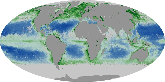 Global Map Chlorophyll Image 12
