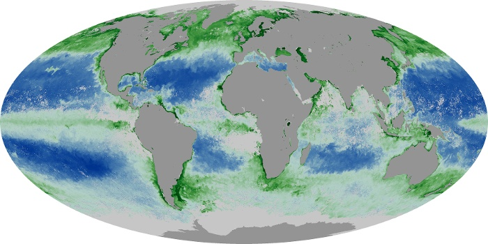 Global Map Chlorophyll Image 15
