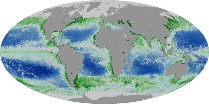 Global Map Chlorophyll Image 17