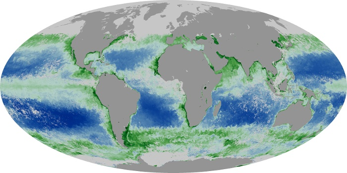 Global Map Chlorophyll Image 18