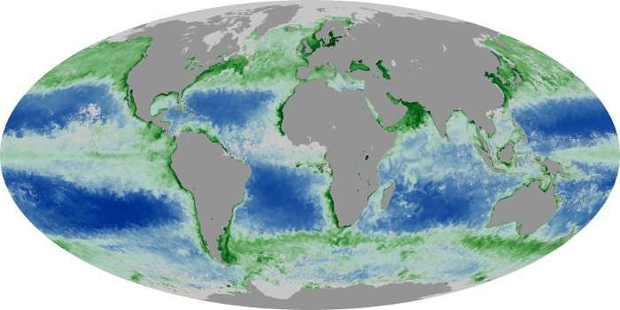 Global Map Chlorophyll Image 69
