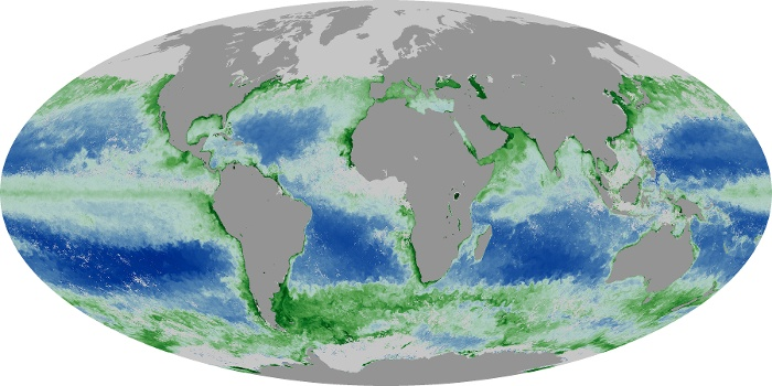 Global Map Chlorophyll Image 30