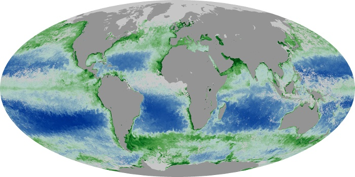 Global Map Chlorophyll Image 32