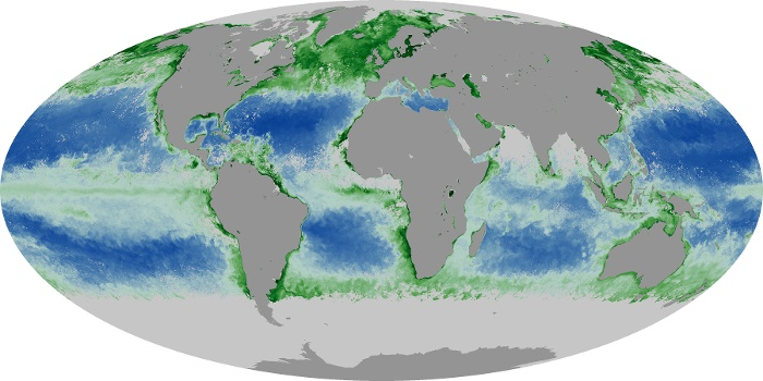 Global Map Chlorophyll Image 84