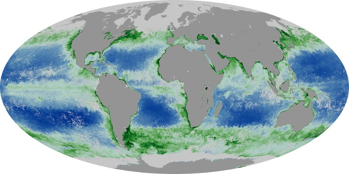 Global Map Chlorophyll Image 89