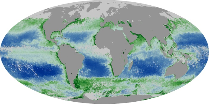 Global Map Chlorophyll Image 91