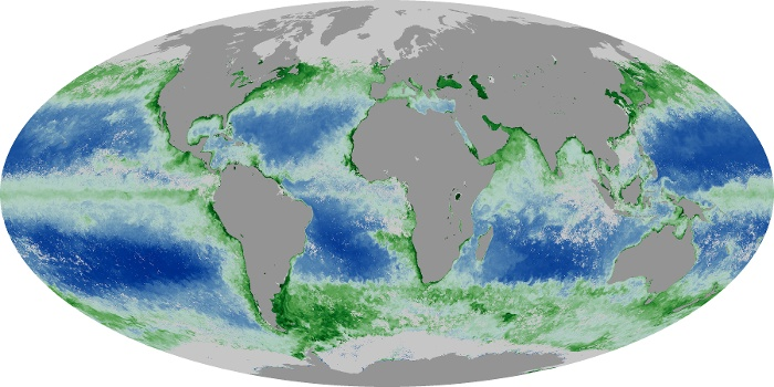 Global Map Chlorophyll Image 53