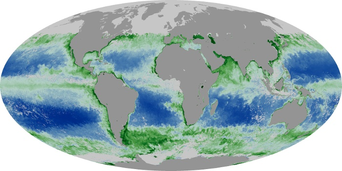 Global Map Chlorophyll Image 102