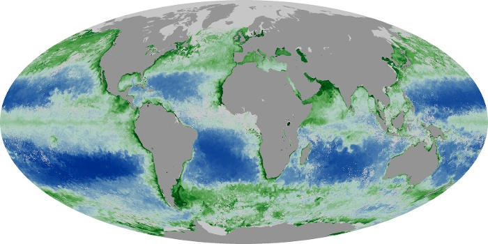 Global Map Chlorophyll Image 56