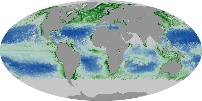 Global Map Chlorophyll Image 60