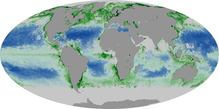 Global Map Chlorophyll Image 61